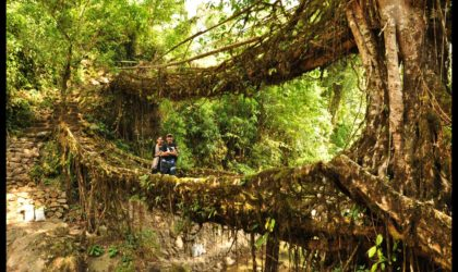 Have You Heard Of Living Bridges? Read On To Know More