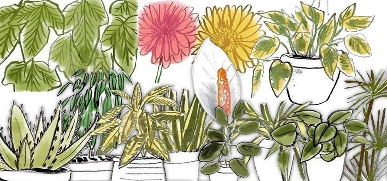 Air Detoxing Houseplants