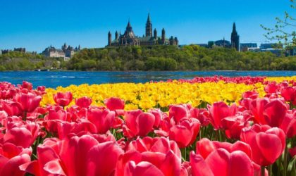 Know About The Special Connection Between Canada And Netherlands