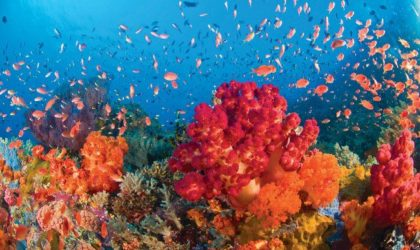 Great Barrier Reef: Near Death To Earth's Largest Biodiversity