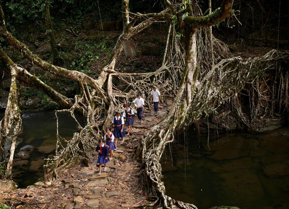living bridges in meghalaya