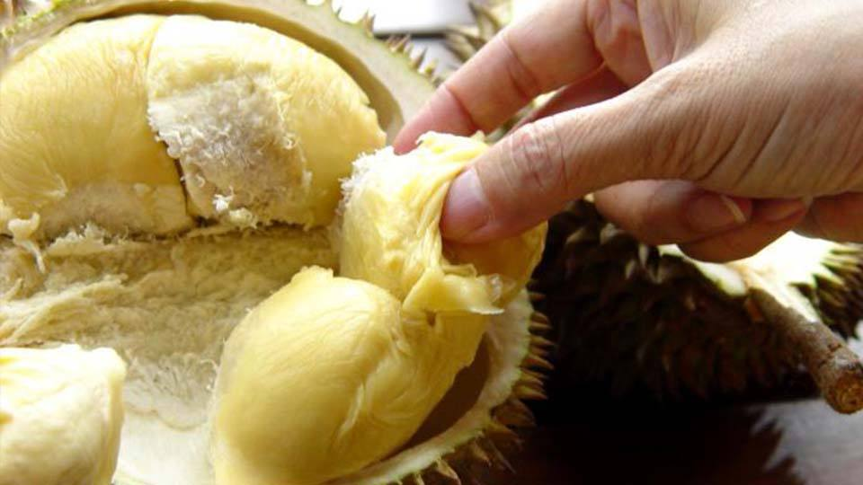 durian world's smelliest fruit