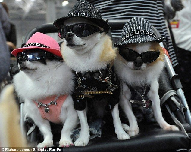 dogs sunglasses