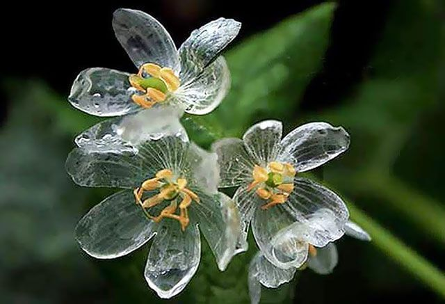gift of nature skeleton flowers