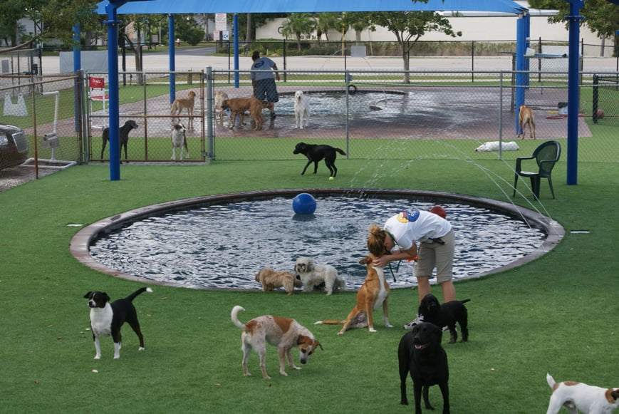 5.  Organize a birthday party for your pooch
