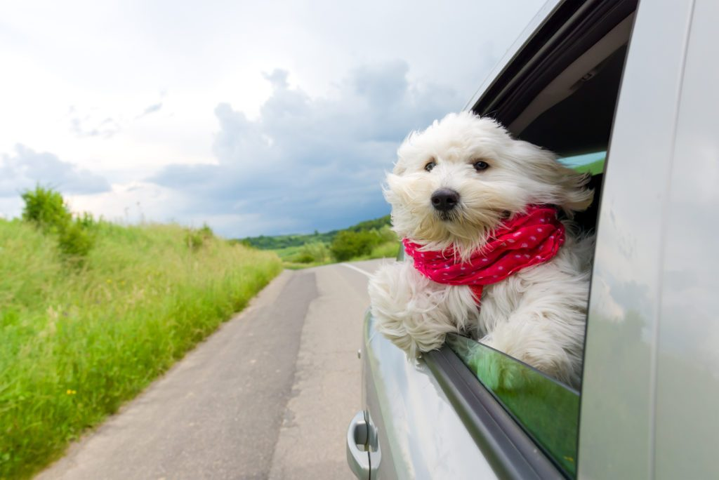 8.     Go on a road trip