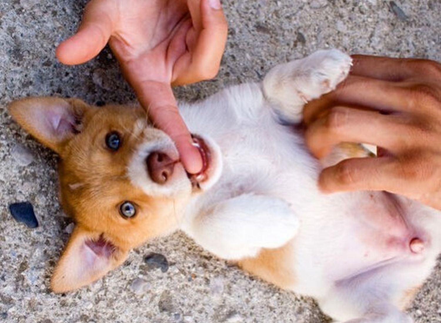 Why do Pooches love their belly rubs?