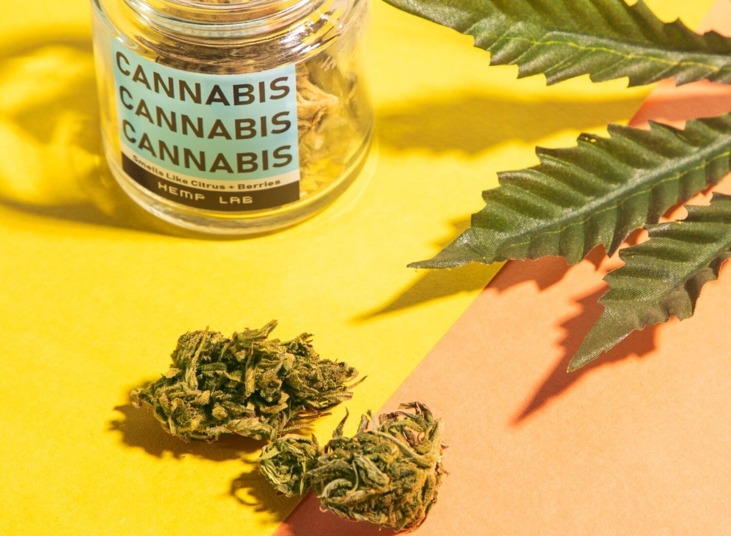 How To Find The Right Cannabis Strains For You?