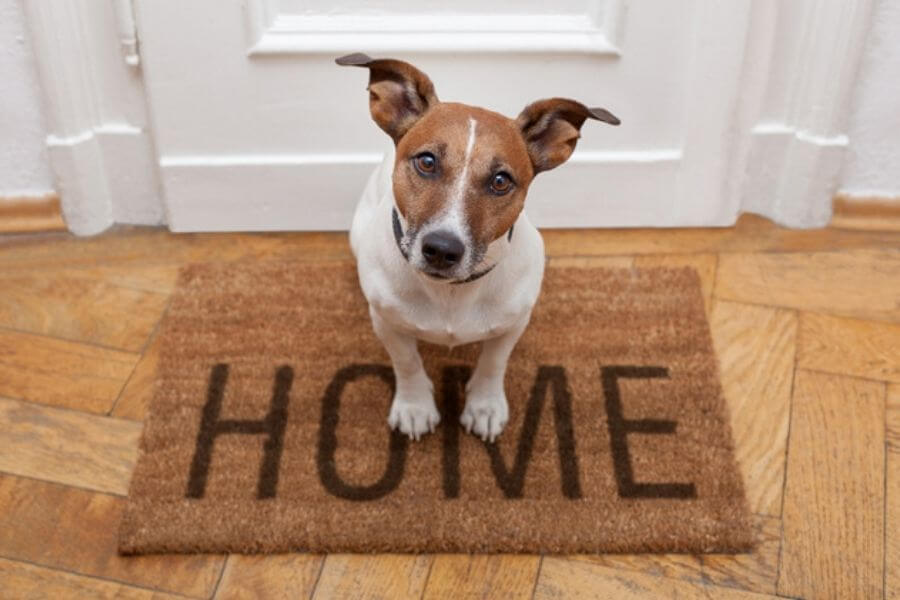 Introduce The New Dog To The House